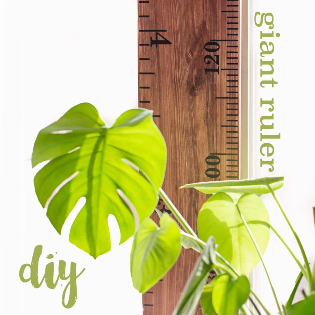 giant-ruler-diy