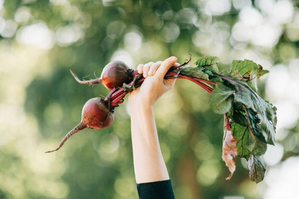Healthy Mom Blogger 2020 Nutritional Benefits of Beets