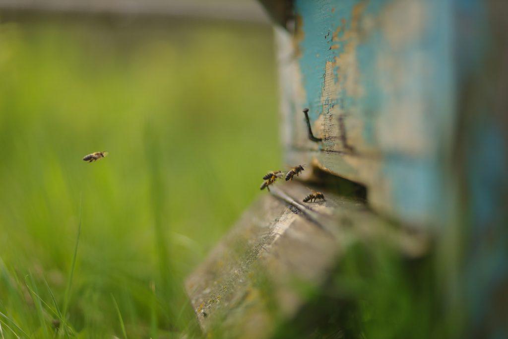 Beekeeping Blog, the history of beekeeping and pollinator gardens Mom Blog 2021