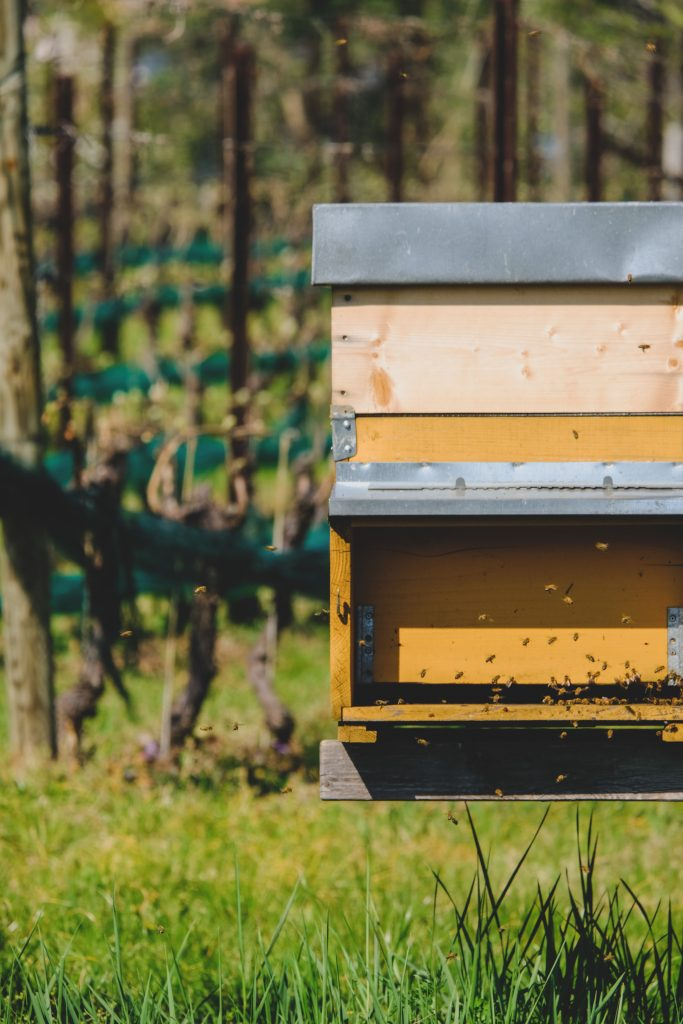 How to start beekeeping, save the bees, beekeeping journals, homesteading blog